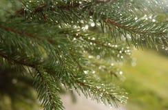 συρμένο απομονωμένο χέρι διανυσματικό λευκό θερινών δέντρων Στοκ Εικόνα