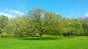 συρμένο απομονωμένο χέρι διανυσματικό λευκό θερινών δέντρων Στοκ Φωτογραφία