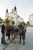 συρμένο κάρρο άλογο Στοκ φωτογραφία με δικαίωμα ελεύθερης χρήσης