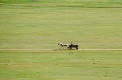 συρμένο κάρρο άλογο στοκ εικόνα