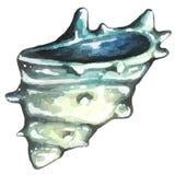 Συρμένο κοχύλι θάλασσας Watercolor χέρι Στοκ Εικόνες
