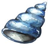 Συρμένο κοχύλι θάλασσας Watercolor χέρι Στοκ Φωτογραφία
