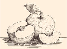 συρμένο μήλα χέρι Στοκ Εικόνες