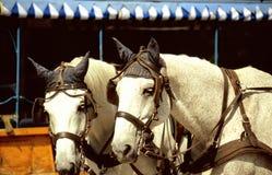 συρμένο μεταφορά άλογο Στοκ Εικόνα