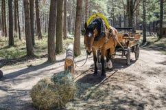 συρμένο μεταφορά άλογο Στοκ φωτογραφία με δικαίωμα ελεύθερης χρήσης