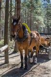συρμένο μεταφορά άλογο Στοκ εικόνα με δικαίωμα ελεύθερης χρήσης