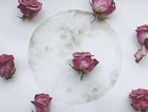 Συρμένο φεγγάρι watercolor και πορφυρά τριαντάφυλλα στοκ φωτογραφία