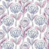 Συρμένο χέρι άνευ ραφής διανυσματικό σχέδιο λουλουδιών protea Στοκ Εικόνες