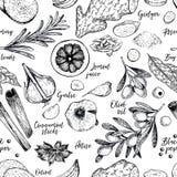 Συρμένο χέρι άνευ ραφής σχέδιο των καρυκευμάτων, των χορταριών και των καρυκευμάτων Χαραγμένο διάνυσμα Κρεμμύδι, φύλλο κόλπων, ελ απεικόνιση αποθεμάτων