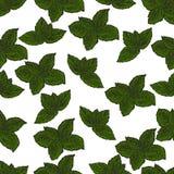 Συρμένο χέρι άνευ ραφής σχέδιο των πράσινων φύλλων μεντών διανυσματική απεικόνιση