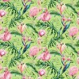 Συρμένο χέρι άνευ ραφής σχέδιο φλαμίγκο πουλιών watercolor τροπικό Εξωτικός αυξήθηκε απεικονίσεις πουλιών, δέντρο ζουγκλών, Βραζι απεικόνιση αποθεμάτων