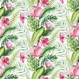 Συρμένο χέρι άνευ ραφής σχέδιο φλαμίγκο πουλιών watercolor τροπικό Εξωτικός αυξήθηκε απεικονίσεις πουλιών, δέντρο ζουγκλών, Βραζι ελεύθερη απεικόνιση δικαιώματος