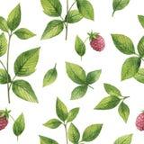 Συρμένο χέρι άνευ ραφής σχέδιο watercolor του φύλλου σμέουρων διανυσματική απεικόνιση
