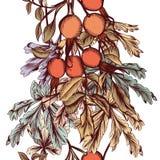 Συρμένο χέρι άνευ ραφής floral υπόβαθρο Στοκ εικόνα με δικαίωμα ελεύθερης χρήσης