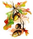 Συρμένο χέρι βελανίδι φύσης φθινοπώρου Watercolor Στοκ εικόνα με δικαίωμα ελεύθερης χρήσης