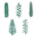 Συρμένο χέρι διάνυσμα πεύκων κλάδων έλατου συνόλου πράσινο Στοκ Εικόνες