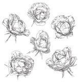 συρμένο χέρι λουλουδιών Στοκ εικόνα με δικαίωμα ελεύθερης χρήσης