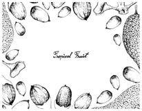 Συρμένο χέρι πλαίσιο Buah Dabai και των φρούτων Cempedak Στοκ Φωτογραφίες