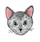 Συρμένο χέρι πρόσωπο της νέας γάτας Στοκ εικόνες με δικαίωμα ελεύθερης χρήσης