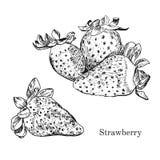 Συρμένο χέρι σκίτσο μελανιού φραουλών Απεικόνιση αποθεμάτων