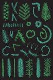 Συρμένο χέρι συνόλου πράσινο διάνυσμα κλάδων έλατου λεπτό Στοκ Εικόνες