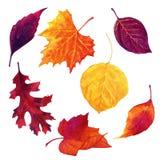 Συρμένο χέρι σχέδιο watercolor με τα φύλλα φθινοπώρου που απομονώνεται στο άσπρο υπόβαθρο ελεύθερη απεικόνιση δικαιώματος