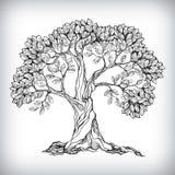 Συρμένο χέρι σύμβολο δέντρων ελεύθερη απεικόνιση δικαιώματος