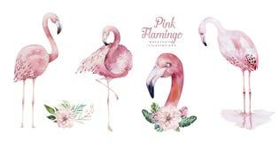 Συρμένο χέρι σύνολο πουλιών watercolor τροπικό φλαμίγκο Εξωτικός αυξήθηκε απεικονίσεις πουλιών, δέντρο ζουγκλών, καθιερώνουσα τη  απεικόνιση αποθεμάτων