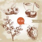 Συρμένο χέρι σύνολο μούρων ύφους σκίτσων Το σμέουρο με βγάζει φύλλα, φράουλες, κεράσι και κλάδος βακκινίων ελεύθερη απεικόνιση δικαιώματος