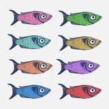 Συρμένο χέρι σύνολο σκίτσων ψαριών Στοκ Εικόνα