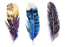 Συρμένο χέρι σύνολο φτερών watercolor Ύφος Boho Στοκ εικόνα με δικαίωμα ελεύθερης χρήσης