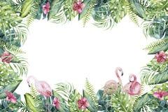 Συρμένο χέρι τροπικό invirtation watercolor backgraund του φλαμίγκο Εξωτικός αυξήθηκε απεικονίσεις πουλιών, δέντρο ζουγκλών, Βραζ στοκ φωτογραφίες