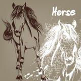 Συρμένο χέρι υπόβαθρο με το άλογο Στοκ φωτογραφία με δικαίωμα ελεύθερης χρήσης
