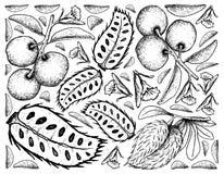 Συρμένο χέρι υπόβαθρο του φρέσκα δαμάσκηνου και Soursop ζωικού λίπους Διανυσματική απεικόνιση