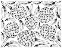 Συρμένο χέρι υπόβαθρο των ώριμων Cherimoya φρούτων Απεικόνιση αποθεμάτων