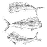 Συρμένο χέρι Dolphinfish Στοκ Εικόνες