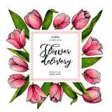 Συρμένο χέρι floral έμβλημα άνοιξη Χρωματισμένη ρόδινη τουλίπα ενάντια φόντου στα όμορφα λουλούδια λουλουδιών παράδοσης δεσμών ομ Στοκ Εικόνες