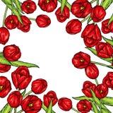 Συρμένο χέρι floral έμβλημα άνοιξη Χρωματισμένη τουλίπα Ευπρόσδεκτη άνοιξη συρμένος εικονογράφος απεικόνισης χεριών ξυλάνθρακα βο Στοκ εικόνες με δικαίωμα ελεύθερης χρήσης