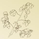 συρμένο χορτάρι χεριών Στοκ Φωτογραφία