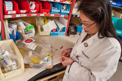 Συσκευάζοντας φάρμακο χημειοθεραπείας φαρμακοποιών Στοκ εικόνες με δικαίωμα ελεύθερης χρήσης