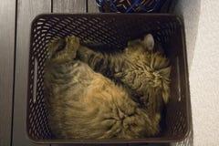 Συσκευασία γατών στοκ φωτογραφίες με δικαίωμα ελεύθερης χρήσης
