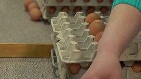 Συσκευασία κοτόπουλου εργοστασίων αυγών απόθεμα βίντεο