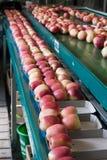 συσκευασία μήλων Στοκ Εικόνες