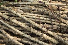 Συσκευασία του λαστιχένιου δέντρου Στοκ Φωτογραφία
