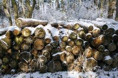 Συσσωρευμένα ξύλινα κούτσουρα δέντρων στο χειμερινό δάσος Στοκ εικόνες με δικαίωμα ελεύθερης χρήσης