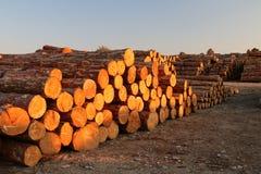 Συσσωρευμένη ξυλεία που λάμπει στο ηλιοβασίλεμα Στοκ Εικόνες