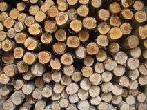Συσσωρευμένη ξυλεία πεύκων είδους Στοκ φωτογραφίες με δικαίωμα ελεύθερης χρήσης