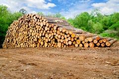 συσσωρευμένη πεύκο ξυλεία Στοκ φωτογραφία με δικαίωμα ελεύθερης χρήσης