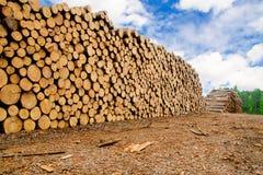 συσσωρευμένη πεύκο ξυλεία Στοκ Εικόνα