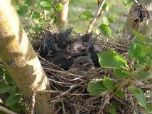 συσσωρευμένη φωλιά Στοκ φωτογραφία με δικαίωμα ελεύθερης χρήσης